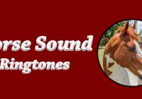 Horse ringtones